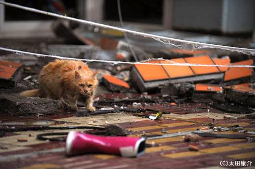 依然等待的動物們…封面貓的下落