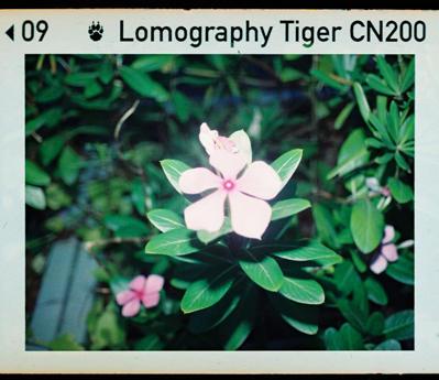 彩色負片現世!Lomography Color Tiger 110