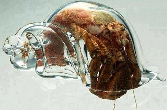 A Hermit Crab in a Glass Shell 寄居蟹in玻璃殼